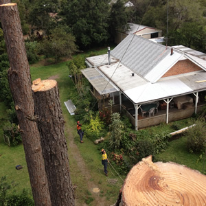 Tree removal Noosa, tree arborist Noosa, tree pruning Noosa, in touch tree services Noosa