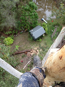 Noosa tree removal, arborist Noosa, In Touch Tree Services