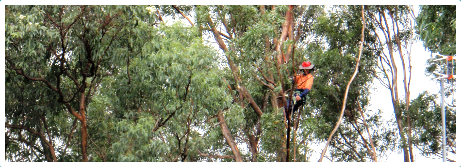 In-Touch Tree Services